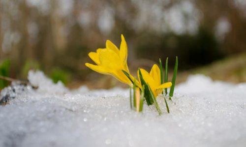 Spring Equinox – Ostara